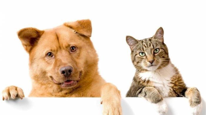 6300 Koleksi Gambar Makanan Hewan Kucing HD Terbaru